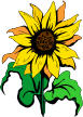 sunflower4.jpg